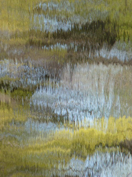 Monet Etude tree reflection Tamara Jaeger
